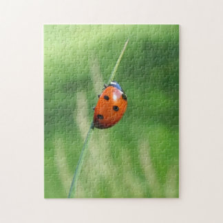 Ladybug on a blade of grass Puzzle