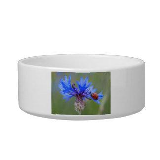 Ladybug on a blue cornflower pet bowls