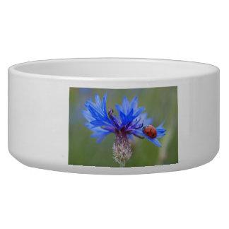 Ladybug on a blue cornflower pet water bowl