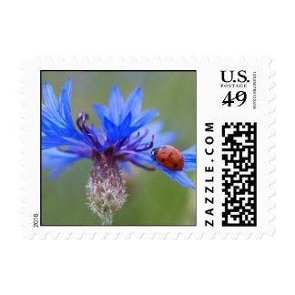 Ladybug on a blue cornflower postage
