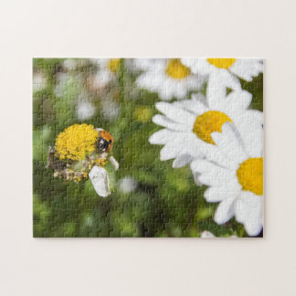 Ladybug on a Daisy Gone to Seed Jigsaw Puzzle