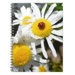 Ladybug on a Daisy Notebook