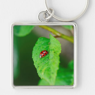 Ladybug on a leaf key chain