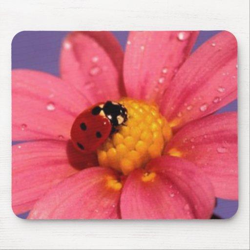 Ladybug On a Pink Daisy Mouse Pad