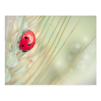 Ladybug on a spike postcard