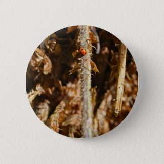 Ladybug on a tree branch Button Badge