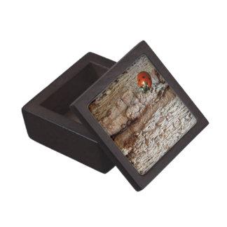 Ladybug on a tree jewelry box