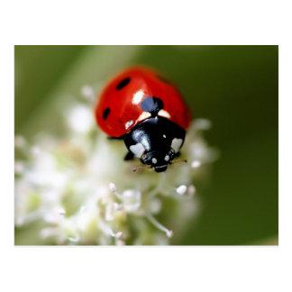 Ladybug on a white flower postcard