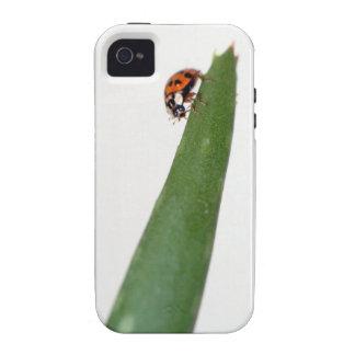 Ladybug on Aloe iPhone Case Vibe iPhone 4 Case