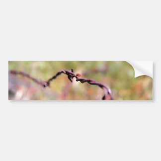 Ladybug on barbed wire. car bumper sticker