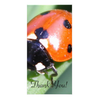 Ladybug on Blade of Grass Card