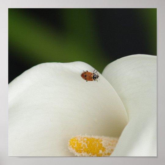 Ladybug on Calla Lily Print