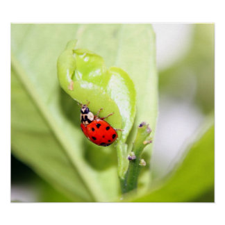 Ladybug on Canvas, Version B Print