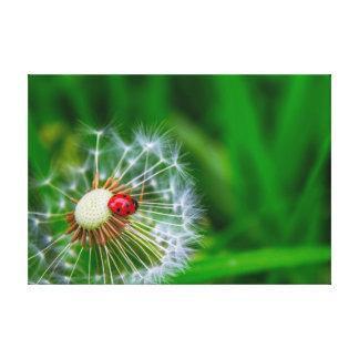 Ladybug on Dandelion clock Canvas Print