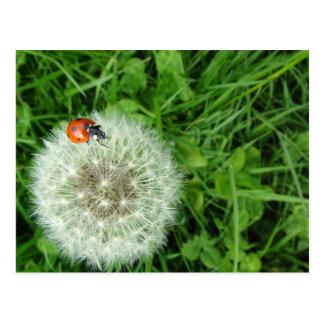 Ladybug on Dandelion Postcard