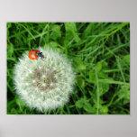 Ladybug on dandelion poster