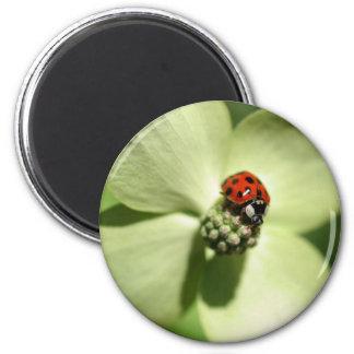Ladybug On Dogwood Flower Nature Magnet