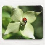 Ladybug On Dogwood Flower Photo Mousepad