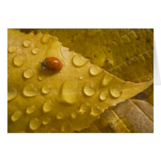 Ladybug on fall-colored leaf. Credit as: Don Card