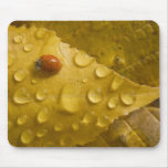 Ladybug on fall-colored leaf. Credit as: Don Mouse Pads