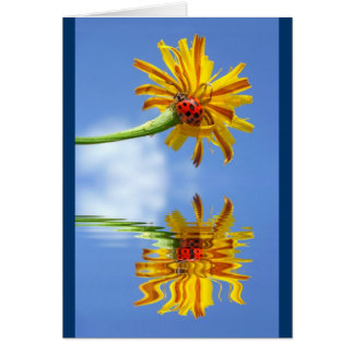 Ladybug on flower above water with reflection card