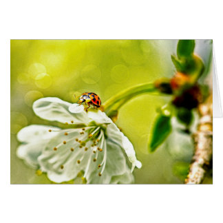 Ladybug on flower card