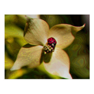 Ladybug On Flower Digital Art Photo Postcard