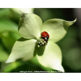 Ladybug On Flower Photo Poster Print print