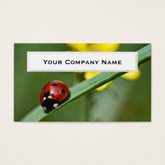 Ladybug on grass blade Business Cards