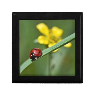 Ladybug on Grass close up Gift Box