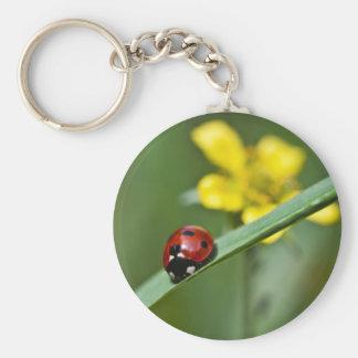 Ladybug on Grass close up Key Chains