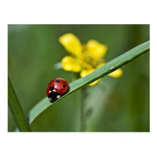 Ladybug on Grass close up Postcard