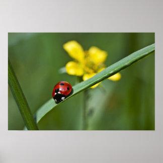 Ladybug on Grass close up Poster