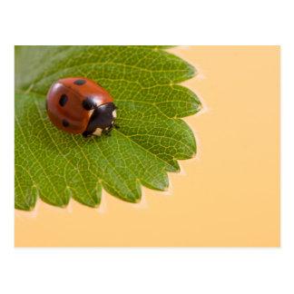 Ladybug on Green Leaf Postcard