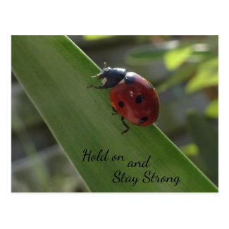 Ladybug on Leaf Hold on and Stay Strong Postcard