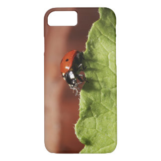 Ladybug on lettuce leaf (MR) iPhone 8/7 Case