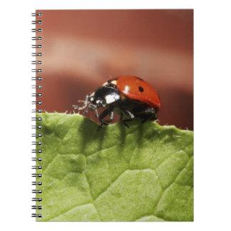 Ladybug on lettuce leaf (MR) Notebook