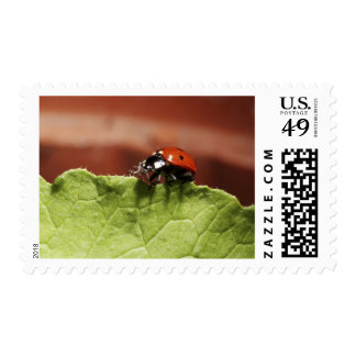 Ladybug on lettuce leaf (MR) Postage