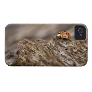 Ladybug on old wood, Apalachicola Bluffs and iPhone 4 Case-Mate Case
