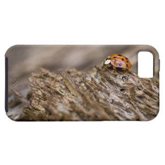 Ladybug on old wood, Apalachicola Bluffs and iPhone SE/5/5s Case