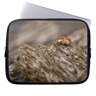 Ladybug on old wood, Apalachicola Bluffs and Laptop Computer Sleeves