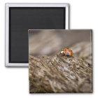 Ladybug on old wood, Apalachicola Bluffs and Magnet