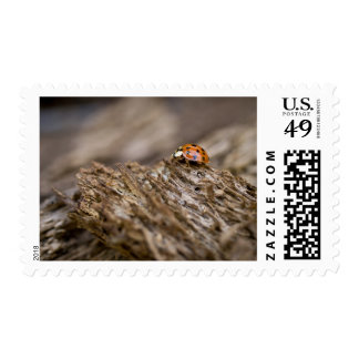 Ladybug on old wood, Apalachicola Bluffs and Postage
