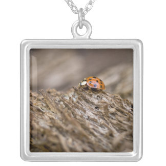 Ladybug on old wood, Apalachicola Bluffs and Silver Plated Necklace