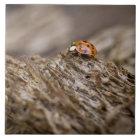Ladybug on old wood, Apalachicola Bluffs and Tile