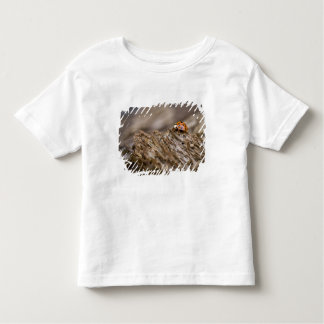 Ladybug on old wood, Apalachicola Bluffs and Toddler T-shirt