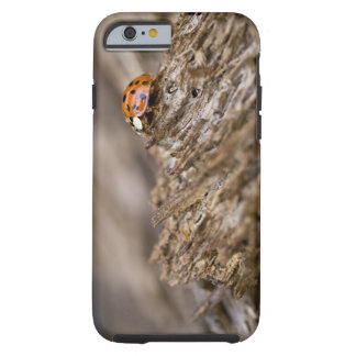 Ladybug on old wood, Apalachicola Bluffs and Tough iPhone 6 Case