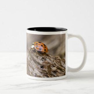 Ladybug on old wood, Apalachicola Bluffs and Two-Tone Coffee Mug
