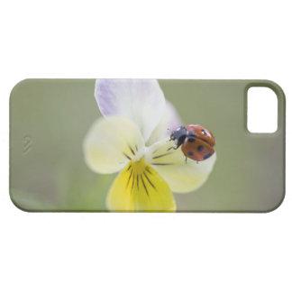Ladybug on pansy, Biei, Hokkaido, Japan iPhone SE/5/5s Case