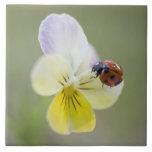 Ladybug on pansy, Biei, Hokkaido, Japan Large Square Tile
